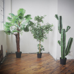 Trees and Cactus £30 each + VAT